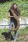Photo by Daniel of his Male BCC boa that is 9 years old and 9 feet 7 inches long.